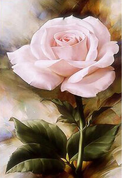 40-50-variety flower pink Beautiful
