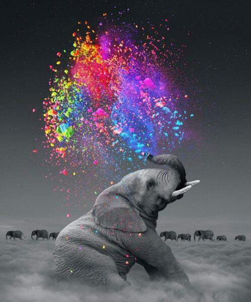Animal Gray Elephant Artistic Squirting Colorful