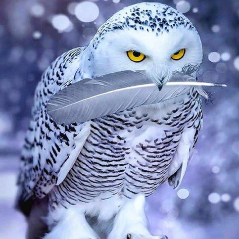 Animal White Owl With Feathers Bright Eyes
