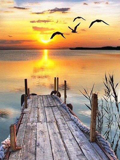 Scene Sunset Lake Surface Wild Goose