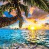 Scene Sunshine Ocean Coconut Tree