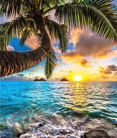 Scene Sunshine Ocean Coconut Tree