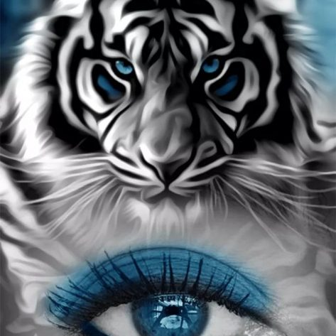 Variety Tiger And Blue Eyes Creativity