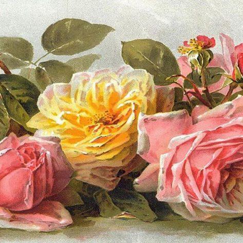 Beautiful And Warm Flowers