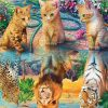 Three Kittens And Three Kings Of The Forest In The Water