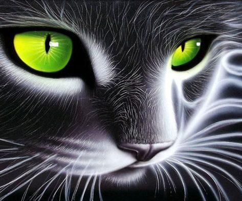 Cool Black Cat