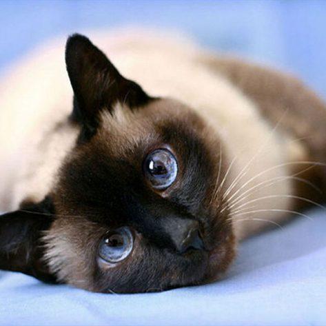 Cute Cat Lying Lazily