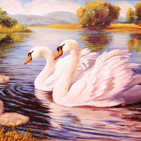 Happy Swan Family Swimming On The Water
